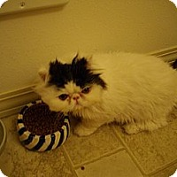 Adopt A Pet :: Toupe - Sheridan, OR