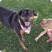 Adopt A Pet :: Roxy companion gentle sweet me - Sacramento, CA
