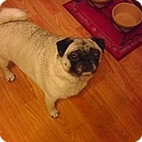 Adopt A Pet :: Neesha - Avondale, PA