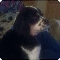 Adopt A Pet :: Dunkin - Tacoma, WA
