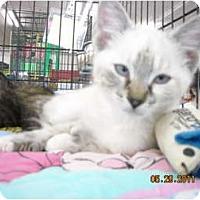 Adopt A Pet :: Carrie - Riverside, RI