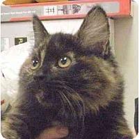 Adopt A Pet :: Reese - Irvine, CA