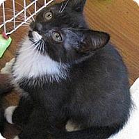 Adopt A Pet :: Little Barbara - Berkeley Hts, NJ
