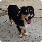 Adopt A Pet :: Carolina