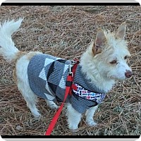 Adopt A Pet :: Ozzie - Hampton, VA
