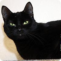 Adopt A Pet :: Jet - Gilbert, AZ