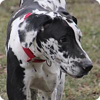 Adopt A Pet :: Reuben - Woodstock, IL