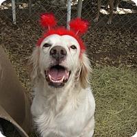 Adopt A Pet :: Ralphy - Fair Oaks Ranch, TX