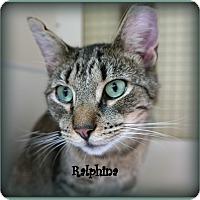 Adopt A Pet :: Ralphie - Trevose, PA