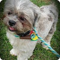 Adopt A Pet :: FONZIE- PENDING ADOPTION!! - Birmingham, MI