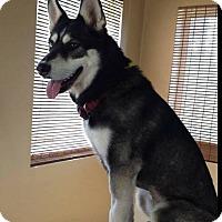 Adopt A Pet :: Una Lea (Luna) - Zanesville, OH