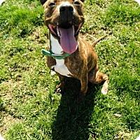 Adopt A Pet :: Kristoph - Dayton, OH