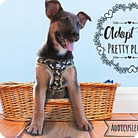 Adopt A Pet :: Abby - West Hartford, CT