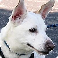Adopt A Pet :: Levi - Germantown, MD