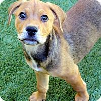 Adopt A Pet :: Hazel - Ft. Lauderdale, FL