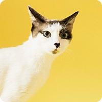Adopt A Pet :: Molly - $10 - Cincinnati, OH