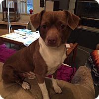 Adopt A Pet :: Buster - Lodi, CA