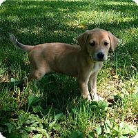 Adopt A Pet :: Rayel - New Oxford, PA