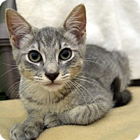 Adopt A Pet :: Prince - Richmond, VA
