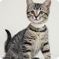 Adopt A Pet :: Tulip - Dublin, CA