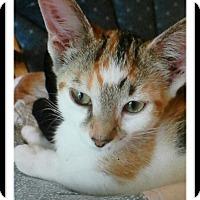 Adopt A Pet :: Kenzie - Trevose, PA