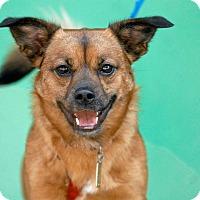 Adopt A Pet :: Tito - Pottsville, PA