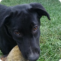 Adopt A Pet :: Xena - Northeast, OH