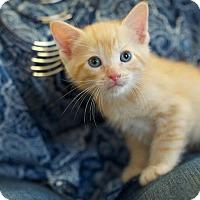 Adopt A Pet :: Barrett - Huntsville, AL