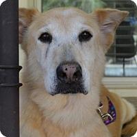 Adopt A Pet :: Spice - Scottsdale, AZ