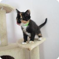 Adopt A Pet :: Athena - Montello, WI