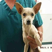 Adopt A Pet :: A571547 - Oroville, CA