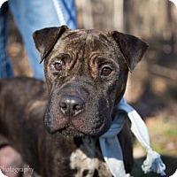 Adopt A Pet :: Roberta - PENDING - Grafton, WI