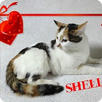 Adopt A Pet :: Shelia - Buffalo, IN