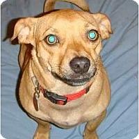 Adopt A Pet :: Penny - courtesy post - Glastonbury, CT