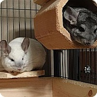 Adopt A Pet :: Ra & Anubis - Virginia Beach, VA