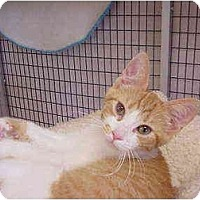 Adopt A Pet :: Tropicana - Deerfield Beach, FL
