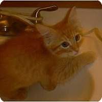 Adopt A Pet :: Pippin - Brea, CA