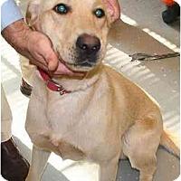 Adopt A Pet :: Scooby - Cumming, GA