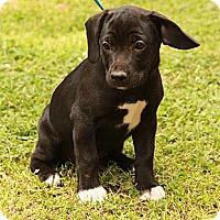 Adopt A Pet :: Frida - Staunton, VA