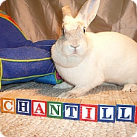 Adopt A Pet :: Chantilly - Newport, DE