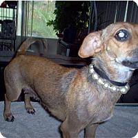 Adopt A Pet :: Mia - Tucson, AZ