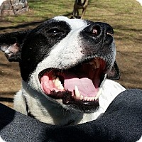 Adopt A Pet :: OREO- PENDING ADOPTION!!! - Birmingham, MI