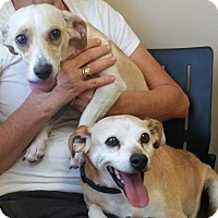Adopt A Pet :: Liam - Las Vegas, NV