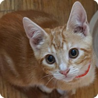 Adopt A Pet :: Thor - Fremont, CA