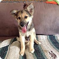 Adopt A Pet :: Keebler - Minneapolis, MN