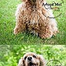 Adopt A Pet :: Misty
