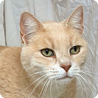 Adopt A Pet :: Richard V - Sacramento, CA