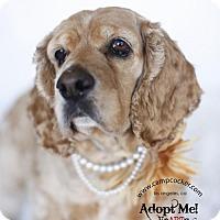 Adopt A Pet :: Rosie - Sherman Oaks, CA