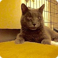 Adopt A Pet :: Dallas - East Brunswick, NJ