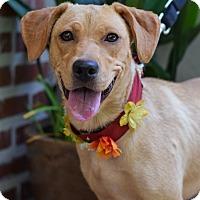 Adopt A Pet :: Astrid - Baton Rouge, LA